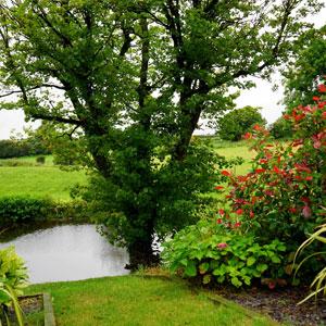 Thomas Tree & Landscape